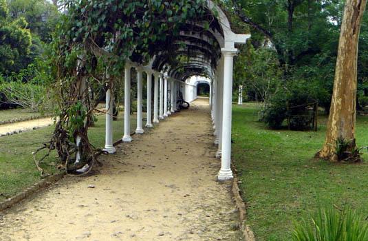 Botanic Garden - Rio de Janeiro - Brazil