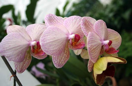 The Orchidarium - Botanic Garden - Rio de Janeiro Brazil