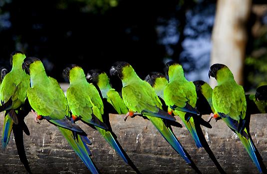 Pantanal birds, Brazil